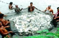 Government announces economic package for fisheries sector