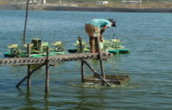 AP Govt urges aqua feed companies to roll-back the price hike