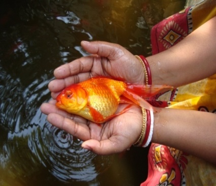Role of protein synthesis inhibitors in fish disease management