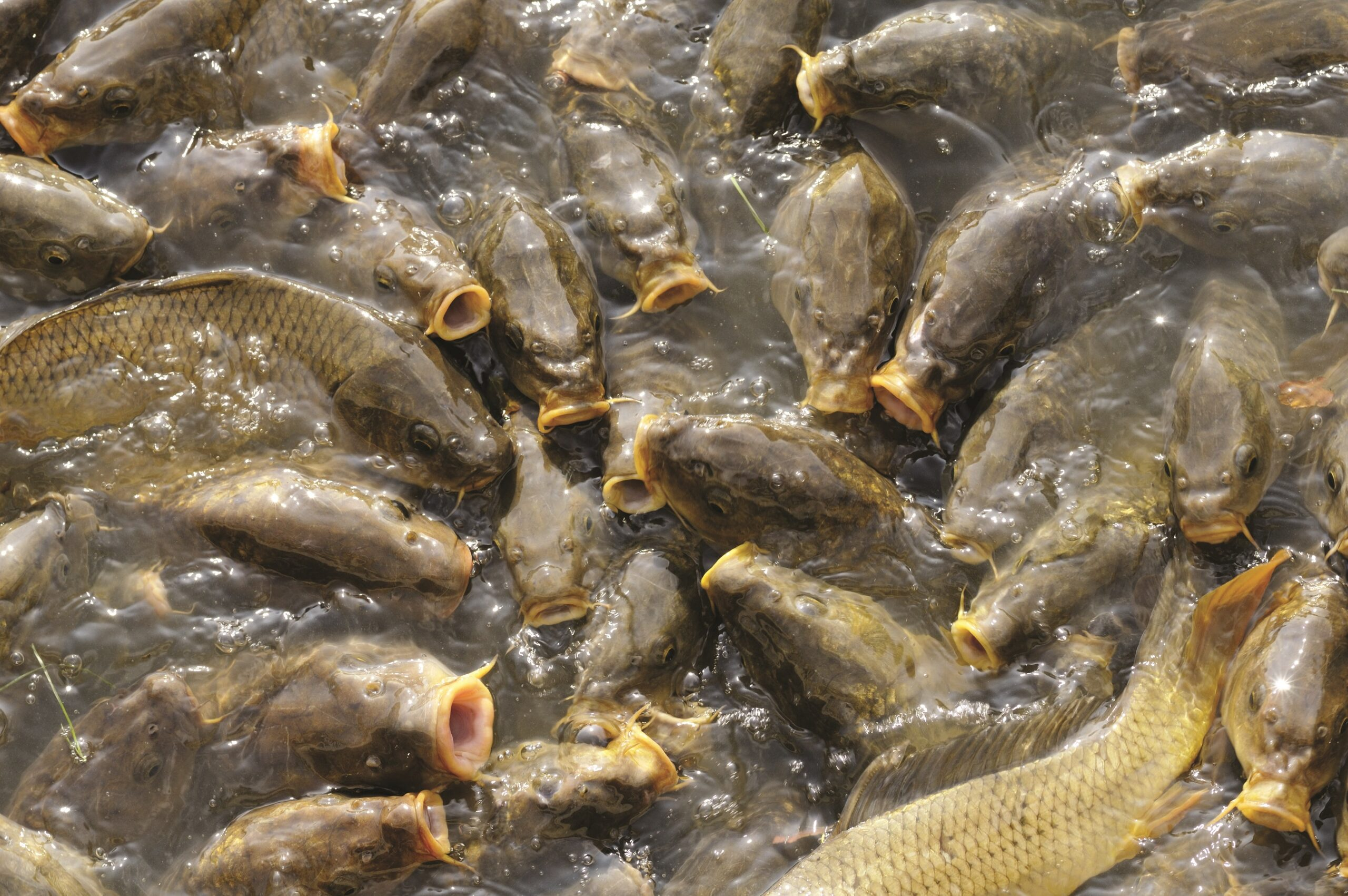 Integrated aquaculture to benefit farmers