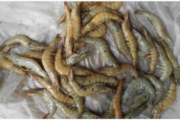 Emerging diseases in shrimp farming