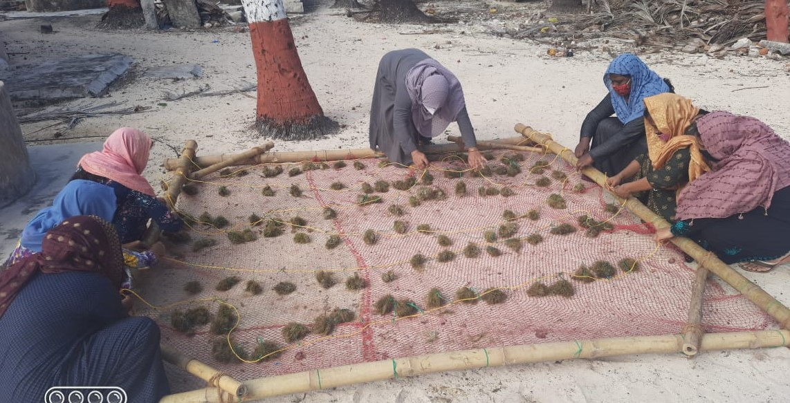 New driver of economic growth: Lakshadweep turns to seaweed farming