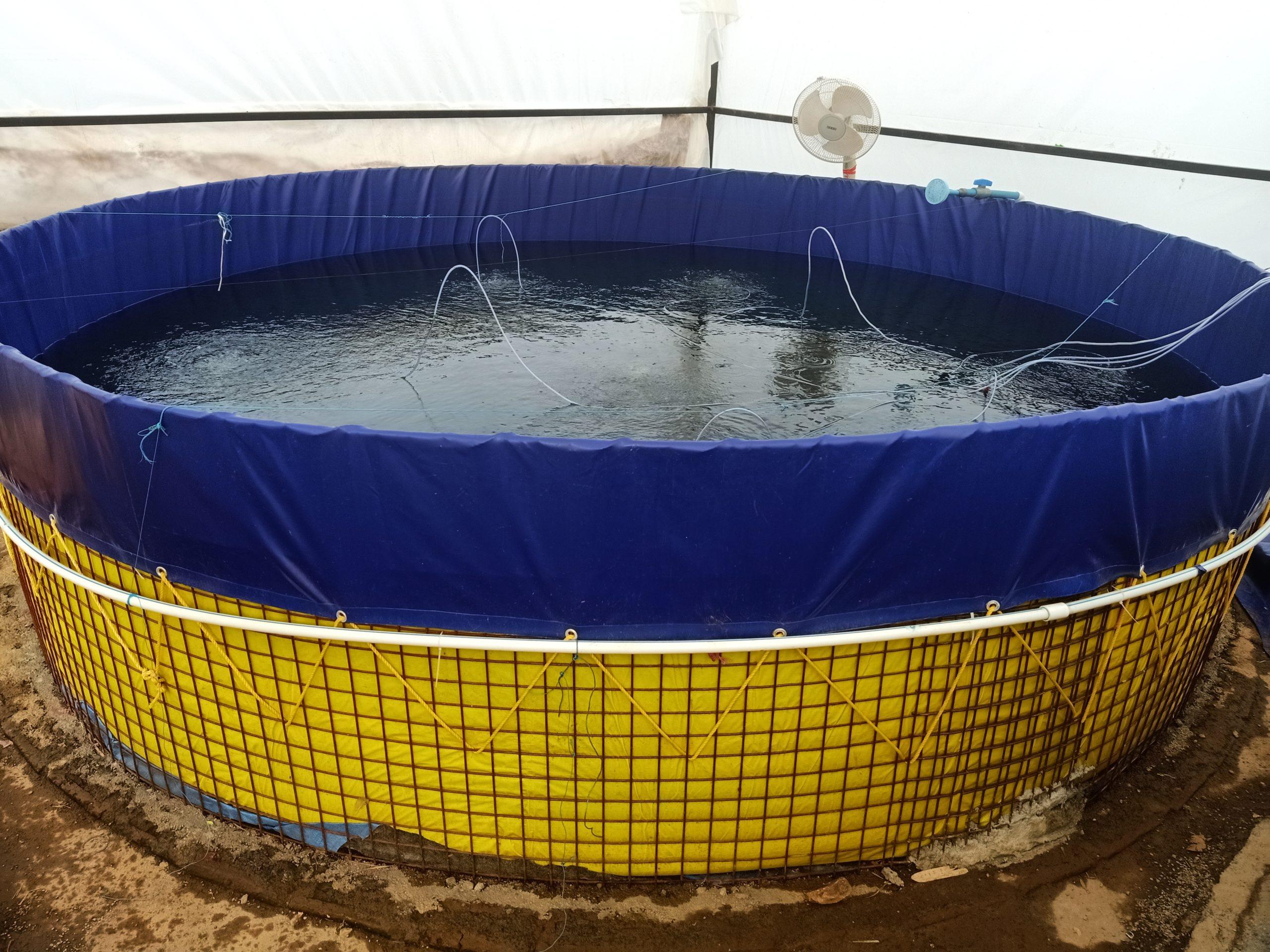 Keystone of future sustainable aquaculture – Biofloc