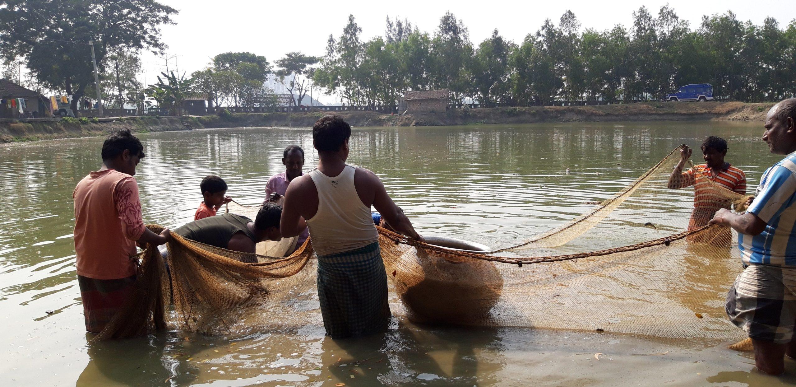 Diversification of Fisheries: Fish farmers in Haldia beat Covid 19 blues