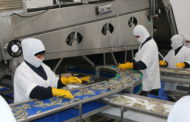 Ecuadorian shrimp export to China witnessed 49% drop in June