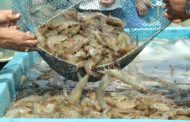 India's seafood exports pegged at 12,89,651 MT in FY 2019-20