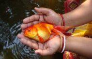 Ornamental fish  trade in India