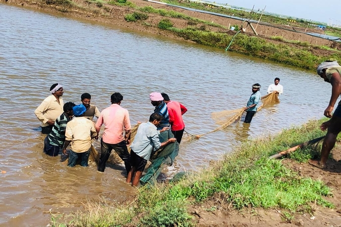 Centre approves 72 Fish Farmers Producer Organizations for 2020-21