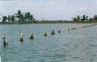 Farm made feed: A promising practice for carp farming