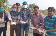 'Dakkhinatter Rui' brings cheers to fish farmers of Haldia block in West Bengal