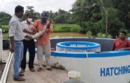 Haldia farmers carry out artificial breeding of endangered Pangasius fish